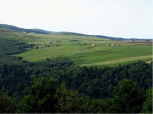 Jasseries de Renat et forêt du vallon de Pierre Brune